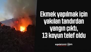 Ekmek yapılmak için yakılan tandırdan yangın çıktı, 13 koyun telef oldu