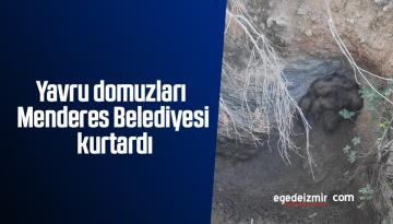 Yavru domuzları Menderes Belediyesi kurtardı