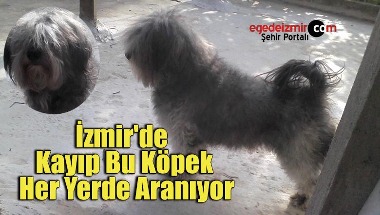 İzmir'de Kayıp Bu Köpek Her Yerde Aranıyor