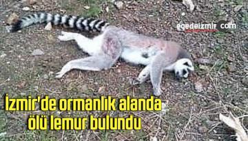 İzmir'de ormanlık alanda ölü lemur bulundu