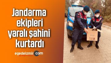 Jandarma ekipleri, yaralı şahini kurtardı