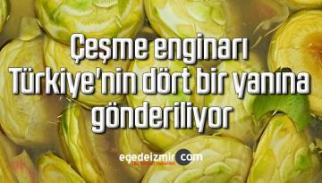 Çeşme enginarı Türkiye'nin dört bir yanına gönderiliyor