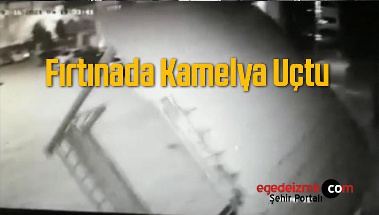 Kamelya Havaya Uçtu, Kuvvetli Fırtına Devam Ediyor