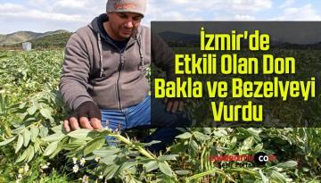 İzmir'de Etkili Olan Don Bakla ve Bezelyeyi Vurdu