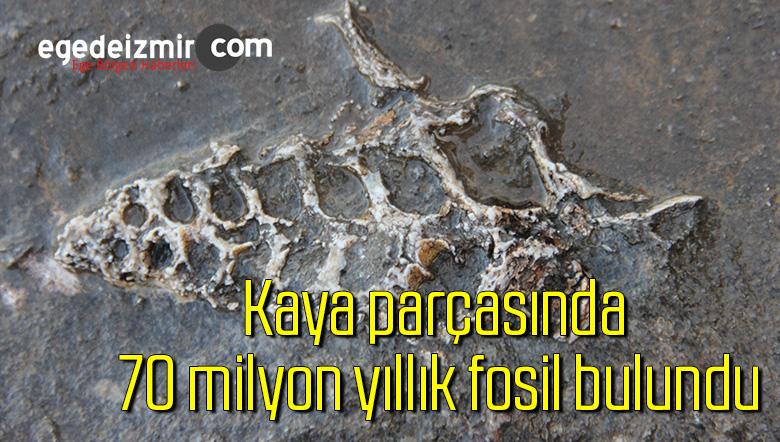 Kaya parçasında 70 milyon yıllık fosil bulundu