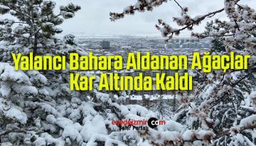 Yalancı Bahara Aldanan Ağaçlar Kar Altında Kaldı