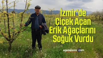 İzmir'de Çiçek Açan Erik Ağaçlarını Soğuk Vurdu