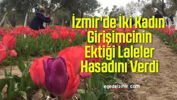 İzmir'de İki Kadın Girişimcinin Ektiği Lalelerin Hasadı Yapıldı