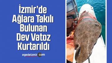 İzmir'de Ağlara Takılı Bulunan Dev Vatoz Kurtarıldı