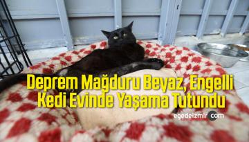 Deprem Mağduru Beyaz, Engelli Kedi Evinde Yaşama Tutundu