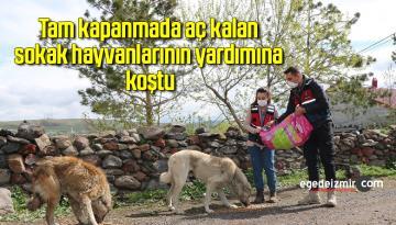 Tam kapanmada aç kalan sokak hayvanlarının yardımına koştu