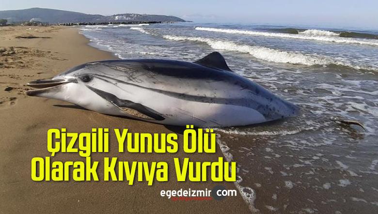 Çizgili Yunus Ölü Olarak Kıyıya Vurdu