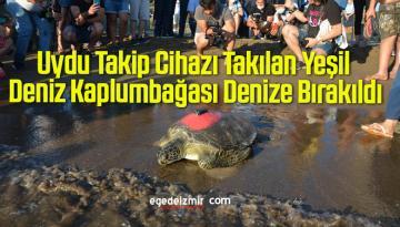 Uydu Takip Cihazı Takılan Yeşil Deniz Kaplumbağası Denize Bırakıldı