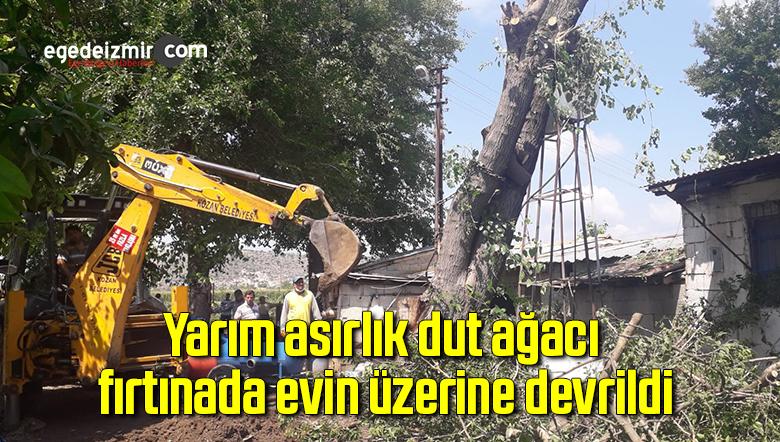 Yarım asırlık dut ağacı fırtınada evin üzerine devrildi