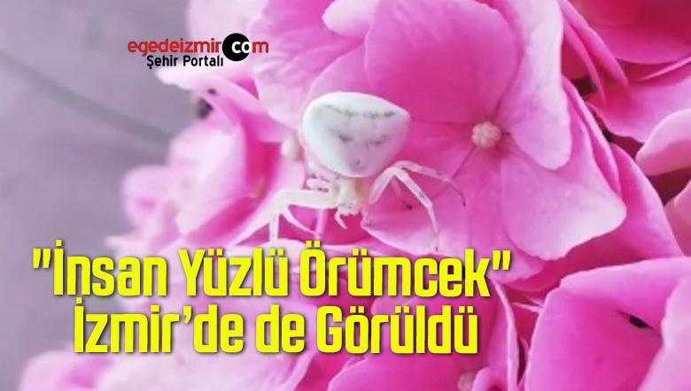 """""""İnsan Yüzlü Örümcek"""" İzmir'de de Görüldü"""