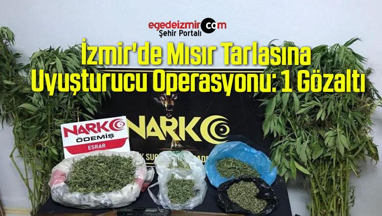 İzmir'de Mısır Tarlasına Uyuşturucu Operasyonu: 1 Gözaltı