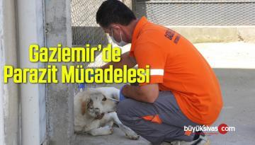 Gaziemir Belediyesi Parazitlere Karşı Harekete Geçti