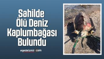 Sahilde Ölü Deniz Kaplumbağası Bulundu