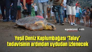 Yeşil Deniz Kaplumbağası 'Talay' tedavisinin ardından uydudan izlenecek