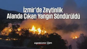 İzmir'de Zeytinlik Alanda Çıkan Yangın Söndürüldü
