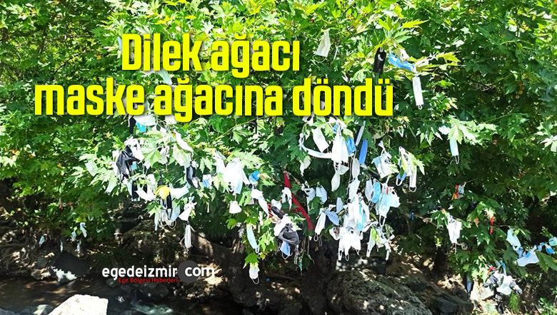 Dilek ağacı maske ağacına döndü