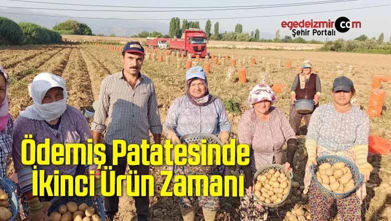 Ödemiş Patatesinde İkinci Ürün Zamanı