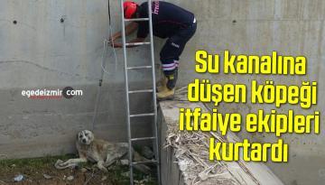 Su kanalına düşen köpeği itfaiye ekipleri kurtardı