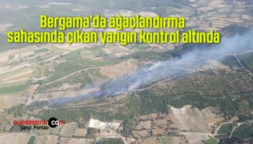 Bergama'da ağaçlandırma sahasında çıkan yangın kontrol altında