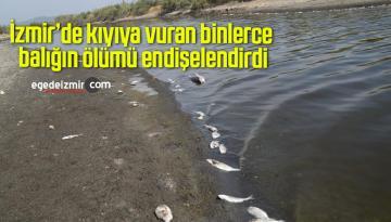 İzmir'de kıyıya vuran binlerce balığın ölümü endişelendirdi