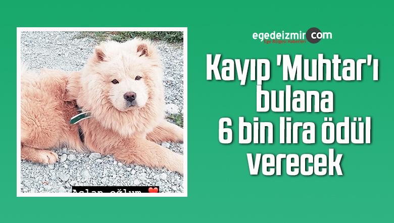 Kayıp 'Muhtar'ı bulana 6 bin lira ödül verecek