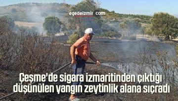 Çeşme'de sigara izmaritinden çıktığı düşünülen yangın zeytinlik alana sıçradı